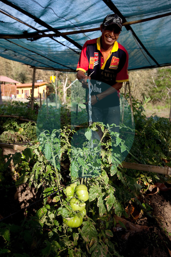 A man waters his vegetable garden in the mountain town of Laclubar, Timor-Leste on Wednesday, Oct. 19th, 2011.  Photographer: Daniel J. Groshong/The Hummingfish Foundation
