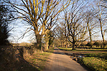 Quiet country road avenue of deciduous trees in winter, Sutton, Suffolk, England, UK