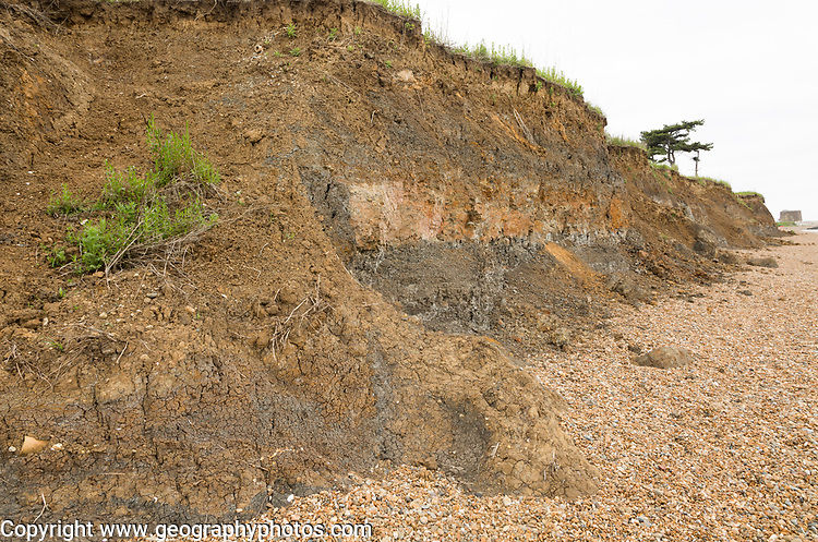 Mass movement collapse of soft clay sandy cliff, Bawdsey, Suffolk, England, UK Early Pleistocene Red Crag Formation near Martello tower W