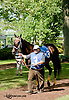 Lubango before The Joe French Memorial Stakes at Delaware Park on 6/1/13
