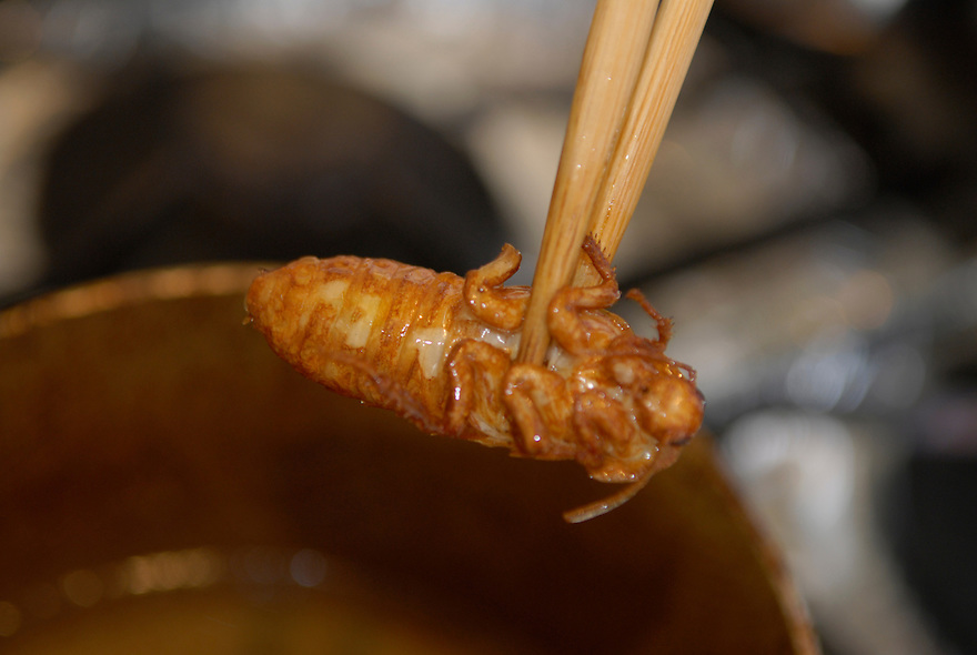 "Deep frying a Madagascar cockroach.Tokyo resident Shoichi Uchiyama is the author of ""Fun Insect Cooking"". His blog on the topic gets 400 hits a day. He believes insects could one day be the solution to food shortages, and that rearing bugs at home could dispel food safety worries."