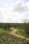 Israel, Shephelah. Tel Zafit-Beth Nir road