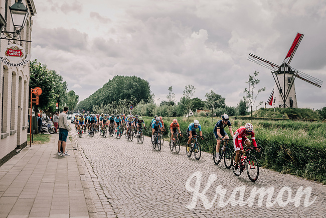 Geoffrey Soupe (FRA/Cofidis) leading the peloton with this pictoresque windmill view....<br /> <br /> <br /> 2nd Elfstedenronde 2018<br /> 1 day race: Brugge - Brugge 196.3km