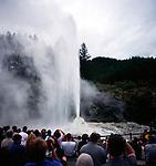 Lady Knox geyser, Waiotapu, near Rotorua, north island, New Zealand