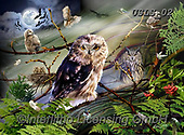 Lori, REALISTIC ANIMALS, REALISTISCHE TIERE, ANIMALES REALISTICOS, paintings+++++Amazing Owls_5_5.5X7.5_72,USLS02,#A#, EVERYDAY ,puzzles