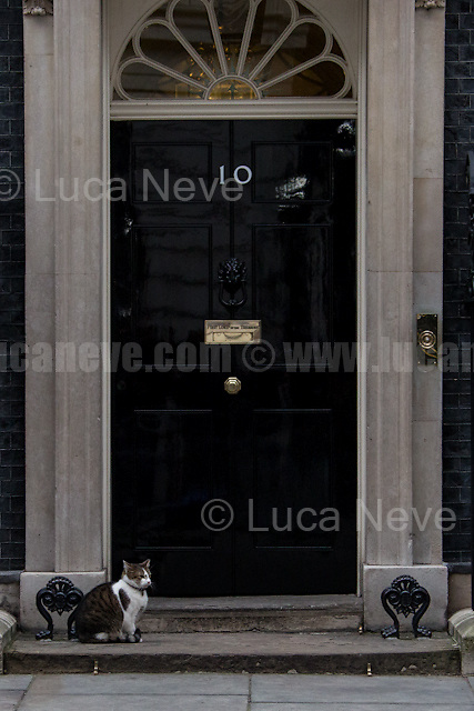 Larry (10 Downing Street cat and Chief Mouser to the Cabinet Office).<br /> <br /> London, 09/02/2017. Today, The Italian Prime Minister, Paolo Gentiloni, visited 10 Downing Street where he had a meeting with the British Prime Minister Theresa May. Noticeably, the Italian Prime Minister used - again (His predecessor and leader of the PD - Democratic Party - Matteo Renzi started this &quot;tradition&quot; to visit 10 Downing Street with a non-Italian car in 2014 replacing the official Maserati Quattroporte - number plate &quot;Ita 1&quot; - with a Chrysler 300c made by FCA, Fiat Chrysler Automobiles. FIAT - Aka Fabbrica Italiana Automobili Torino - moved its tax domicile from Italy to the UK just the day before - see my story here https://goo.gl/hH5a6O) - a different car for his official visit in the UK. In fact, this time the official Maserati Quattroporte &quot;Ita 1&quot;, was replaced by an Audi A8L 6.3 W12 quattro, a luxury car produced by the German and world leader of the car industry, Volkswagen Group.