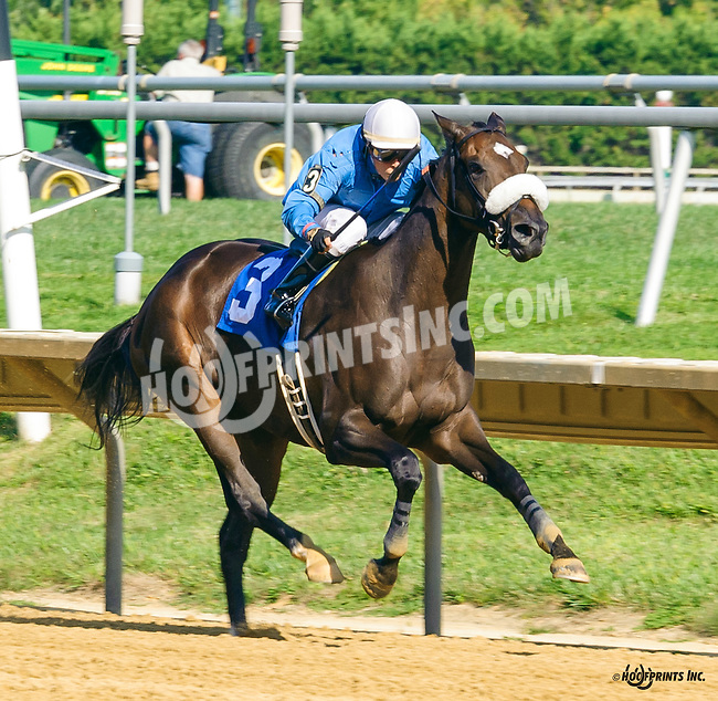 Bellinbusto winning at Delaware Park on 9/5/16