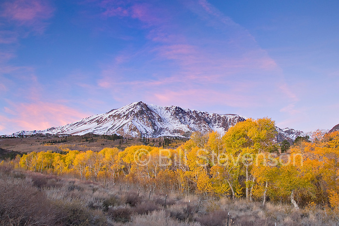 A photo of yellow aspens trees below a snowy Mount Wood in the Sierra mountains.