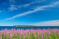 Fireweed wildflowers and Bonaventure Island in the Atlantic Ocean at the end of the Gaspe Peninsula. Parc national de l'&Icirc;le-Bonaventure-et-du-Rocher-Perc&eacute;. This is a provincial parc, not a true federal park.<br />