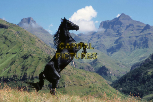 The Young Black Stallion.Filmstill - Editorial Use Only.Ref: FB.www.capitalpictures.com.sales@capitalpictures.com.Supplied by Capital Pictures