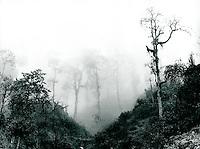 Berge in Darjeeling, Indien 1974