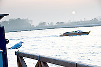 La lagune  a proximite de l'aeroport Marco Polo.(Venise, Octobre 2006)