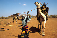 Women loading camels before leaving for migration