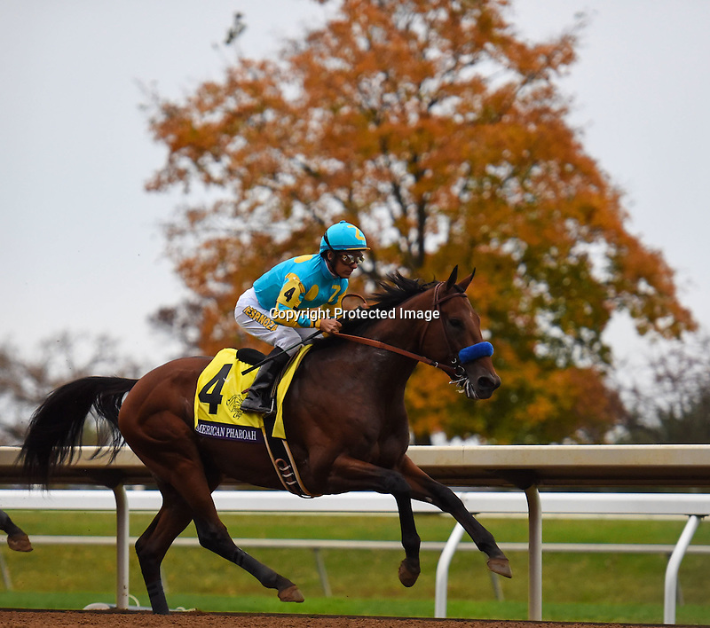 October 31, 2015 :  American Pharoah, ridden by Victor Espinoza, wins the Breeders' Cup Classic (Grade I) in Lexington, Kentucky on November 1, 2015. Samantha Bussanich/ESW/CSM