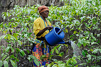 Afrika ANGOLA Calulo, Frau bewaessert Kaffeesetzlinge auf einer Farm - Africa ANGOLA Calulo, woman waters coffee seedlings at farm