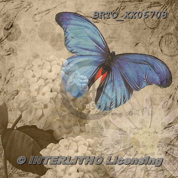 Alfredo, STILL LIFE STILLLEBEN, NATURALEZA MORTA, paintings+++++,BRTOXX06708,#i# ,butterflies ,butterfly