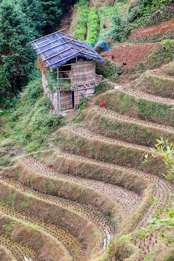 Longji, China.  Narrow Terraced Rice Paddies after Harvest Cling to the Hillsides.
