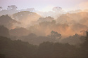 Ecuador, Amazonia, Tiputini River, primary old-growth tropical rainforest canopy in morning fog, at sunrise
