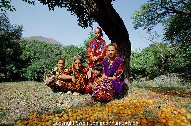 The famous Tadzhik apricots, on the road between Kul'Ab and Dushanbe south east Tadzhikistan