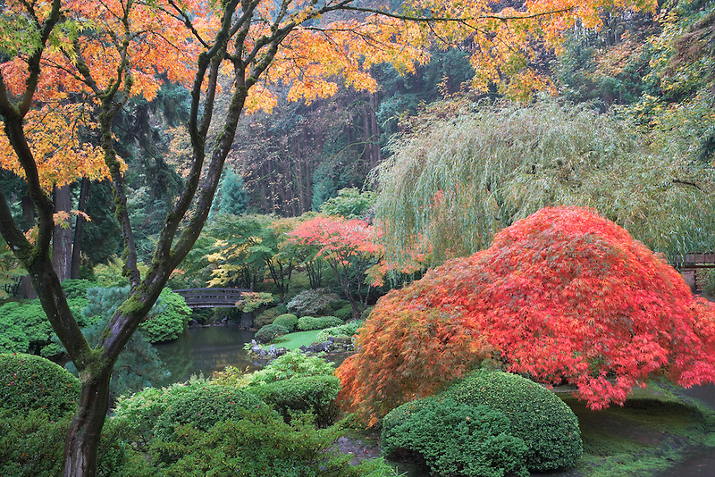 Fall color at Japanese Gardens. Portland. Oregon
