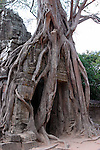 Ta Som-East Gopura Engulfed by Tree Roots-Cambodia