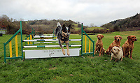 FAO JANET TOMLINSON, DAILY MAIL PICTURE DESK<br />Pictured: A dog is jumping hurdles at the assault course Wednesday 23 November 2016<br />Re: The Dog House in the village of Talog, Carmarthenshire, Wales, UK