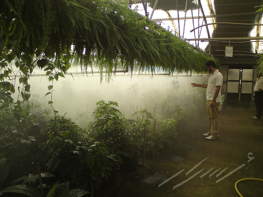 Yong man checking out the misty watering system for rare plants in a green house.