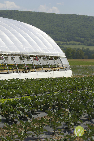 Amish greenhouse