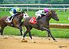 Tizsomethingroyal winning at Delaware Park on 8/1/16