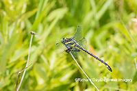 06447-00118 Dragonhunter (Hagenius brevistylus) Scott Fen Ripley Co. MO