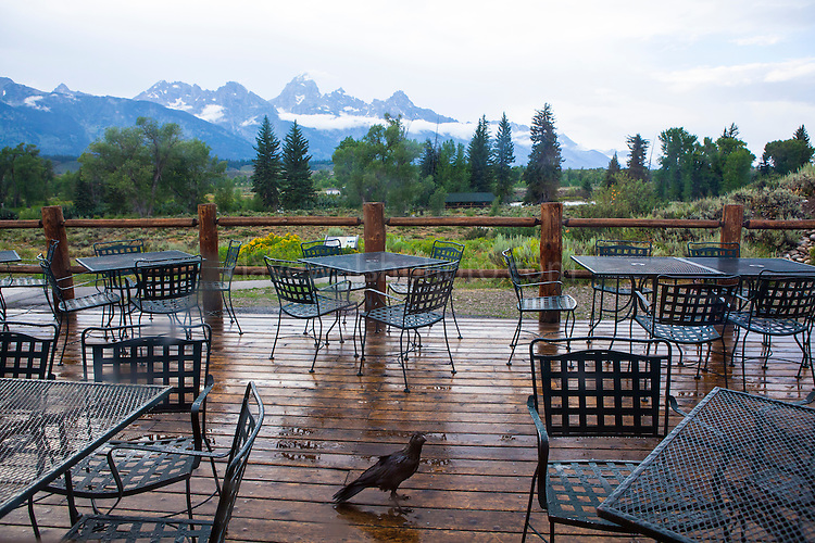 A crow stands on the rain-soaked verandah at Dornan's bar and pizza restaurant, Moose Junction, Grand Teton National Park, Wyoming, USA.