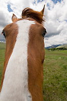 Wide angle view of horse