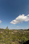Israel, Mounr Carmel. Pine trees by Route 721