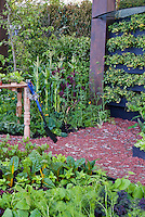 Vegetable Garden and Backyard Table, unusual mulch using old keys and washers, raised beds and climbing tomato tier. Corn, kale, fennel, garden spade tool
