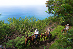 The guided mule ride from Kaulapapa National Park to the top of the sea cliffs on the island of Molokai, Hawaii, USA