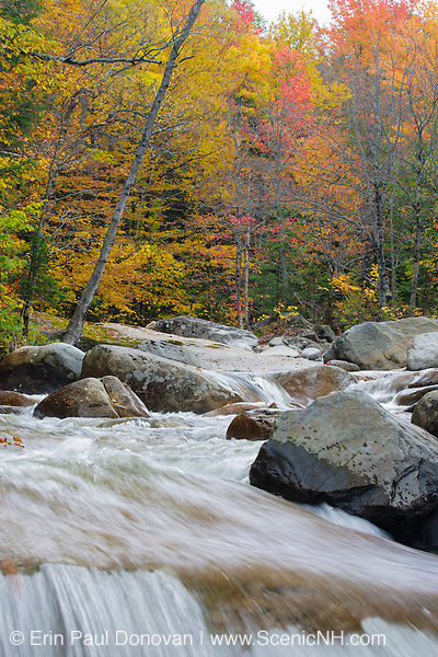 Autumn foliage along the Little River during the autumn months in Bethlehem, New Hampshire.