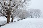 Europa, DEU, Deutschland, Nordrhein Westfalen, NRW, Rheinland, Niederrhein, Krefeld, Baeume, Winter, Schnee, Typische Kopfweide an einem Entwaesserungsgraben, Kategorien und Themen, Natur, Umwelt, Landschaft, Jahreszeiten, Stimmungen, Landschaftsfotografie, Landschaften, Landschaftsphoto, Landschaftsphotographie, Wetter, Wetterelemente, Wetterlage, Wetterkunde, Witterung, Witterungsbedingungen, Wettererscheinungen, Meteorologie, Wettervorhersage....[Fuer die Nutzung gelten die jeweils gueltigen Allgemeinen Liefer-und Geschaeftsbedingungen. Nutzung nur gegen Verwendungsmeldung und Nachweis. Download der AGB unter http://www.image-box.com oder werden auf Anfrage zugesendet. Freigabe ist vorher erforderlich. Jede Nutzung des Fotos ist honorarpflichtig gemaess derzeit gueltiger MFM Liste - Kontakt, Uwe Schmid-Fotografie, Duisburg, Tel. (+49).2065.677997, ..archiv@image-box.com, www.image-box.com]