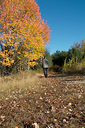 A person walking down a trail which is surrounded by fall colors from the state of New Hampshire, USA, Which is located in New England
