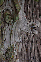 Bark Detail, Stuart Island, San Juan Islands, Washington, US