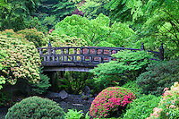 Japanese Garden with Bridge