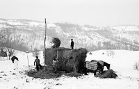 ROMANIA / Maramures / Valeni / January 2003..Peasants transfer a haystack to a horse drawn sleigh in the hills surrounding Valeni. It can take an entire morning or afternoon to fetch just one haystack as they are located up 10 kilometers from the village...© Davin Ellicson / Anzenberger..