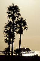 The Venice pier and palm trees in a silhouette against the afternoon sun in LA, California, USA