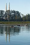 Harbor Seal (Phoca vitulina) group near power plant, Elkhorn Slough, Monterey Bay, California
