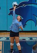Volleyball: Fayetteville at Springdale Har-Ber