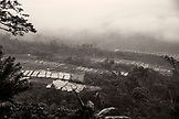 INDONESIA, Flores, looking down onto rice fields in the fog in the area of Compang