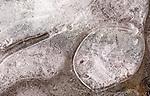 Puddle Ice Bubble