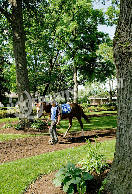 Martita Sangrita before The John W. Rooney Memorial Stakes at Delaware Park on 6/2/12