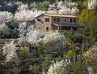 Spanien, Balearen, Mallorca, Mandelbluete und Finca bei Fornalutx | Spain, Balearic Islands, Mallorca, Almond blossom near Fornalutx