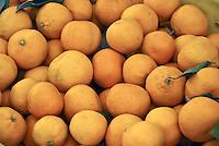 Grapefruit (Citrus × paradisi),subtropical citrus fruit, Yellow, Orange