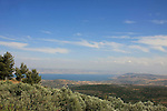 Israel, Upper Galilee, an olive grove by road 866 overloking the the Sea of Gallilee